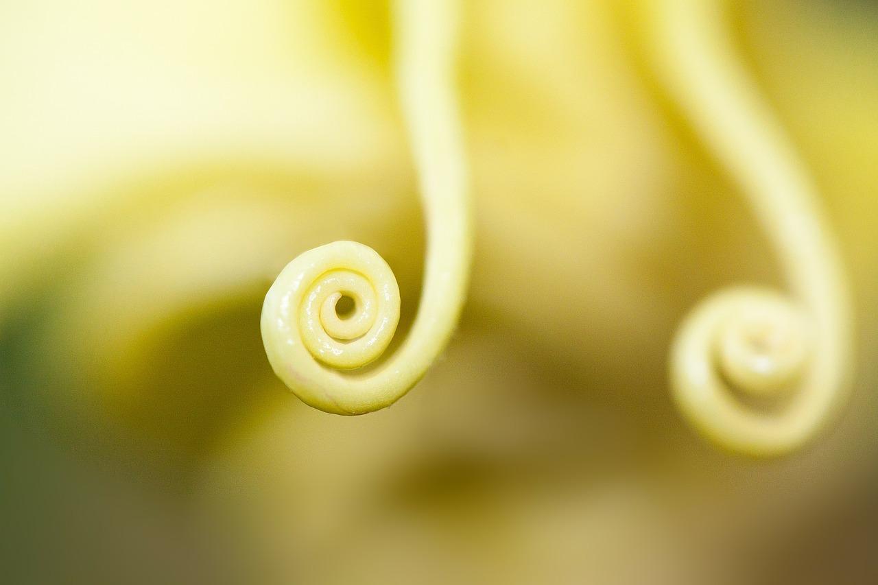 flower-234982_1280