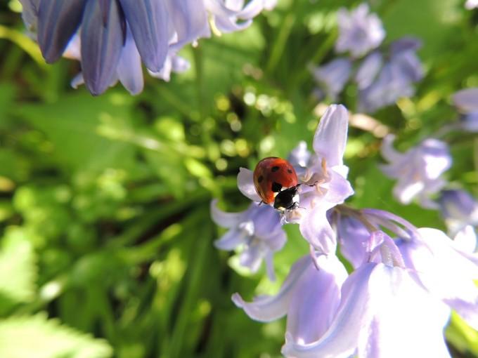 ladybird-449333_1280
