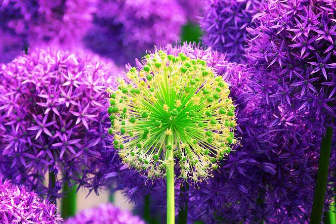 flower-139356_1280