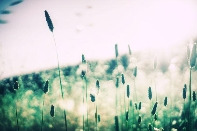 grass-828706_1280