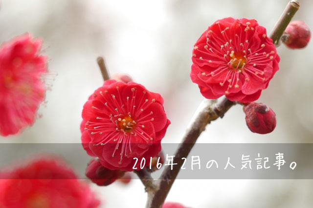 2016年2月の人気記事イメージ画像 梅