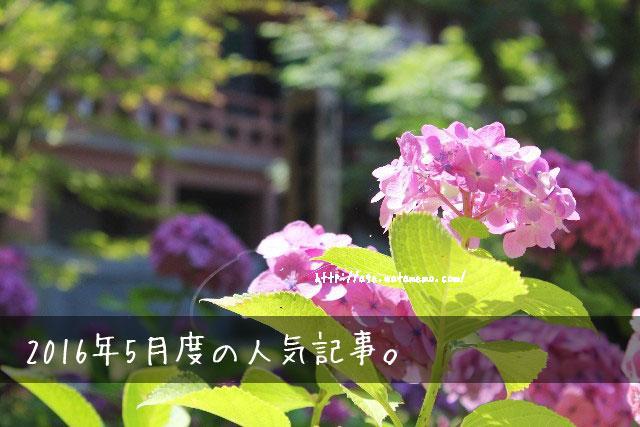 紫陽花_イメージ画像